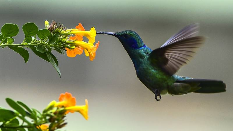 """""""Female hummingbirds disguise themselves as males to be left alone."""""""