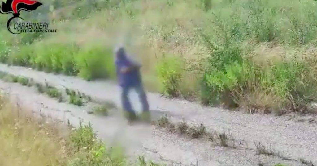 Italian farmer injured by wildfire |  abroad