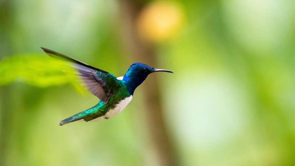 Keeping men away from you?  This is how female hummingbirds do it