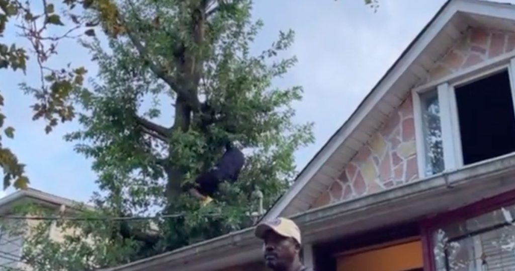American spends three days in a tree to avoid the police    Abroad