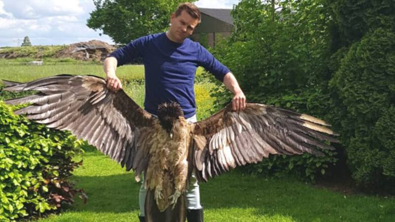 The death of the rare eagle that flew in the windmill can be prevented